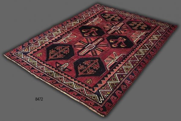 Persian Lori 8472