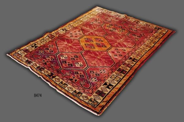 Persian Lori 8474