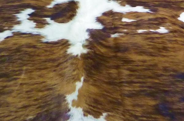 Cowhide exotic 9331